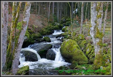 01-0320 Black Forrest Stream