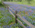 Split Rail At Springtime