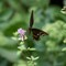 Butterfyly