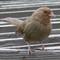 100% Crop of Sparrow