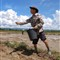 Rice sower 2