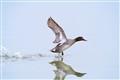 Duck-off