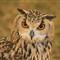 owl 1 small_c