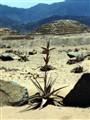 Caral desert, Perú