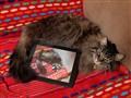 Cat Annoyatron