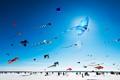 Kites St-Placide 2013 DP