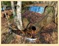 Bad birch