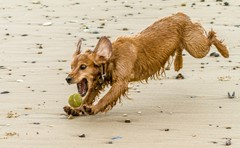 Cooper chases a ball