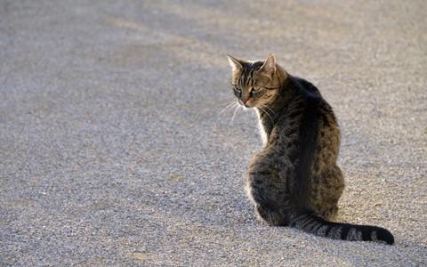 Cat@SchlossHof