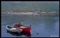 Cod boats.