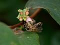 Bee No.2
