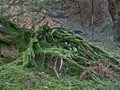 Roots & Moss