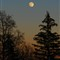 moon1w