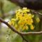 yellow flor1