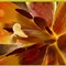 Inner Tulip 5