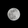 moon face 02