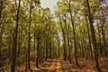 Kanha national park forest,M.P.India.