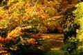 An autumn symphony