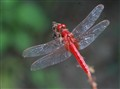 dragonfly_007