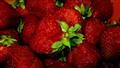 Succulent Red