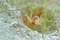 spider amongst dews