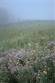 Cliff Cave County Park, in Mehlville, Missouri, USA - wildflower meadow in fog