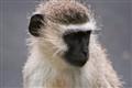 Monkey Life