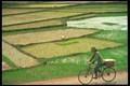 Vietnam Rice Planting