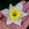 Equinox Flowers 1