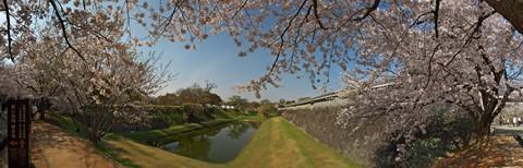 熊本城桜07panoDPR