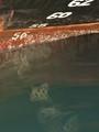 numeri sciolti nell'acqua P1022265