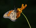 Fragile Butterfly and Flower