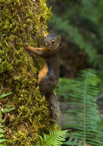 Elwha_DouglasSquirrel_1XS_070812_16_9_reduced
