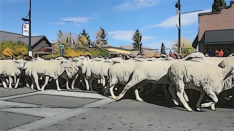 Trailing of the Sheep, Ketchum, ID Sony RX100 Illustration EffectDSC00196