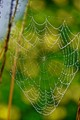 I woke up on morning and had this web outside my San Clemente CA home.