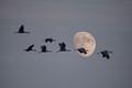 Flying Crane Moon