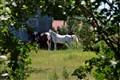 Summer Horses