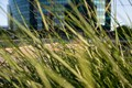 grass/weeds Hartford, CT, USA