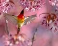 Sunbird&Flowers