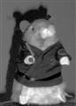 Kung-Fu Hamster