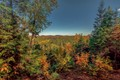fall arrived a Bat Lake trail in Algonquin Park