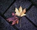 Leaves 2 on Ground