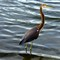 BirdCloser1280_IMG_3151