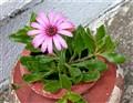 a flower !