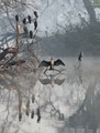 An Indian Darter spreads its wings during a foggy morning at Keoladeo National Park, Bharatpur, India