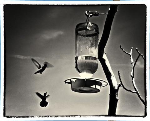 hum-bird