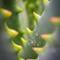 agave monster_15