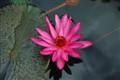 20080714_MenaCreek_ParonellaPark_Flower_2