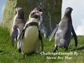 Penguins @ Blackbrook Wildllife Park