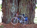 Redwood with Motobecane.